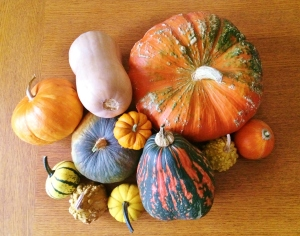 'A cornucipia of winter squashes""