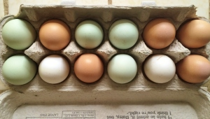 """Colorful fresh eggs from the hens"""