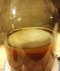 """Scoby floating on top of sweet green tea mixture"""