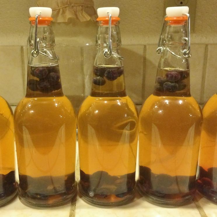"""Blueberry Kombucha fermenting"""