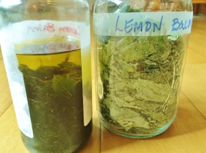 """Left: infused lemon balm Right: dried lemon balm"""