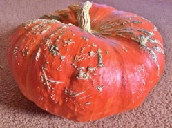 """Cinderella Pumpkin"""