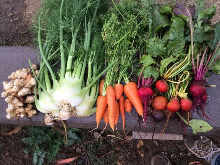 """""""Root veggies from the garden"""""""