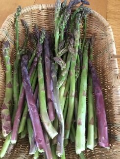 """Purple and Green Asparagus"""