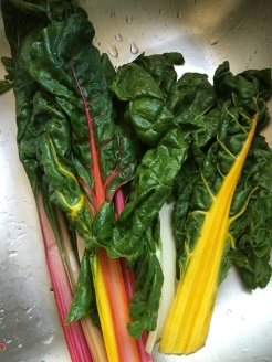 """Beautiful Rainbow Chard"""